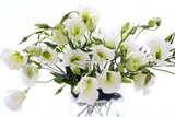 Lisianthus Flowers (Lisianthus Sp.) Photographic Print by Erika Craddock