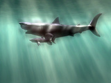 Megalodon Shark And Great White Poster von Christian Darkin