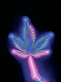 Marijuana Leaf, Kirlian Photograph Posters by  Booth