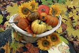 Harvested Pumpkins And Sunflowers Photographic Print by Erika Craddock