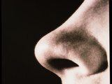 Close-up of a Human Nose (side View) Photographic Print by  Cristina
