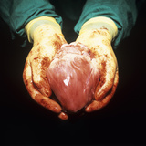 Heart Transplant Premium Photographic Print by Kevin Curtis