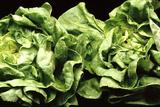 Lettuces Reproduction photographique par Victor De Schwanberg