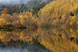 Reflections of Autumn Colours In Loch Posters by Adrian Bicker