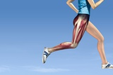 Leg Muscles In Running, Artwork Photographic Print by Henning Dalhoff