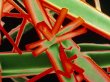 False-colour SEM of Caffeine Crystals Photographic Print by Dr. Jeremy Burgess
