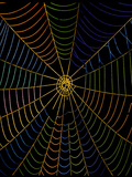 Coloured Image of Web of Garden Spider, Araneus Photographic Print by Dr. Jeremy Burgess