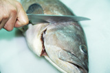 Fish Preparation Photographic Print by  Cristina