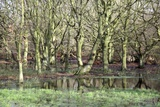 Flooded Trees Photographic Print by Victor De Schwanberg
