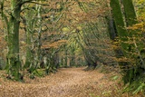 Woodland Path Photographic Print by Adrian Bicker