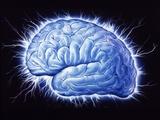 Human Brain Posters by John Bavosi