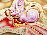 Otitis Media of Ear Photographic Print by John Bavosi