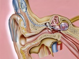 Cochlear Implant, Artwork Photographic Print by John Bavosi