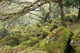 Wistman's Wood, Dartmoor Prints by Adrian Bicker