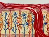 Menstruation Print by John Bavosi