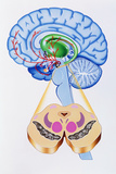 Artwork of Brain Areas In Parkinson's Disease. Posters by John Bavosi