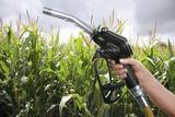Maize Biofuel, Conceptual Image Photographic Print by Victor De Schwanberg