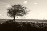Bare Tree Photographic Print by Victor De Schwanberg