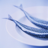 Mackerel Photographic Print by  Cristina