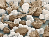 Salt Grains And Ground Peppercorn, SEM Papier Photo par Thomas Deerinck