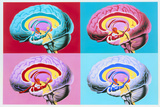 Artworks Showing the Limbic System of the Brain Prints by John Bavosi