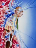 Artwork Depicting Parkinson's Disease Prints by John Bavosi