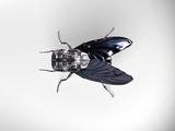 Robot Fly Prints by Christian Darkin