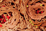 Coloured SEM of Blood Vessels In the Skin Posters by Steve Gschmeissner