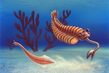 Cambrian Animals, Artwork Prints by Richard Bizley