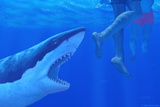 Shark Attack Photographic Print by Chris Butler