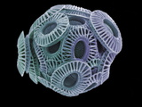Calcareous Phytoplankton, SEM Photographic Print by Steve Gschmeissner