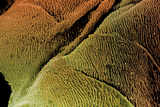 Coloured SEM of Epithelial Cells In the Oesophagus Photographic Print by Steve Gschmeissner