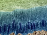 Tooth Enamel Formation, SEM Premium Photographic Print by Steve Gschmeissner