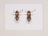 Fruit Flies Photographic Print by Lizzie Harper