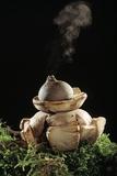 Earth Star Mushroom Photographic Print by Andy Harmer