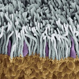 Retina Rods And Cones, SEM Photographic Print by Steve Gschmeissner