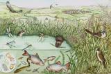 British Reedbed Wildlife Poster von Lizzie Harper