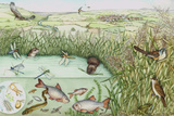 British Reedbed Wildlife Posters by Lizzie Harper