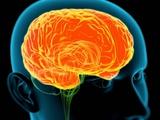 Human Brain, Artwork Photographic Print by Roger Harris