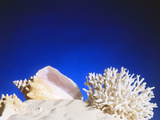 Conch Shell, Coral And Starfish Lying In Sand Prints by Victor Habbick