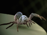 Baby Spider, SEM Photographic Print by Steve Gschmeissner