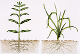 Plant Comparison Photographic Print by Lizzie Harper