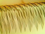 Mosquito Wing, Light Micrograph Prints by Gerd Guenther