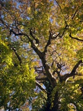 Tree In Autumn Posters by Tek Image