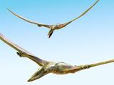 Pterosaurs Flying, Computer Artwork Photographie par Roger Harris
