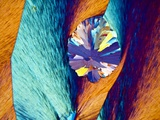 Paracetamol Crystals, Light Micrograph Photographic Print by Gerd Guenther