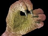 Foot of a Chameleon Affiches par Steve Gschmeissner