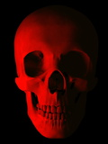 Human Skull Photographic Print by Roger Harris