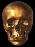 Human Skull Premium Photographic Print by Roger Harris