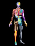 Body Imaging Photographic Print by Mehau Kulyk